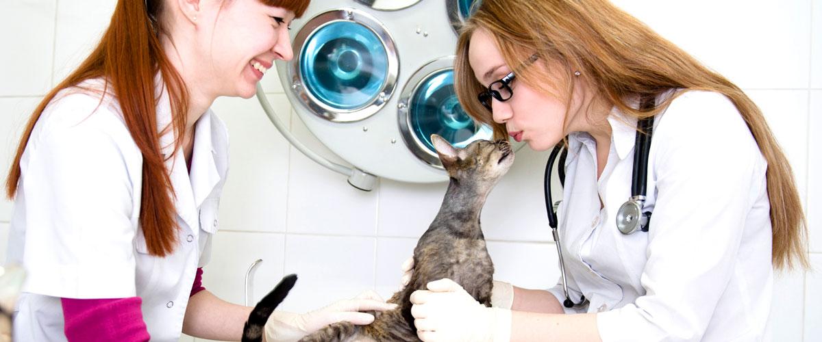 Krankheiten und Symptome bei Katzen