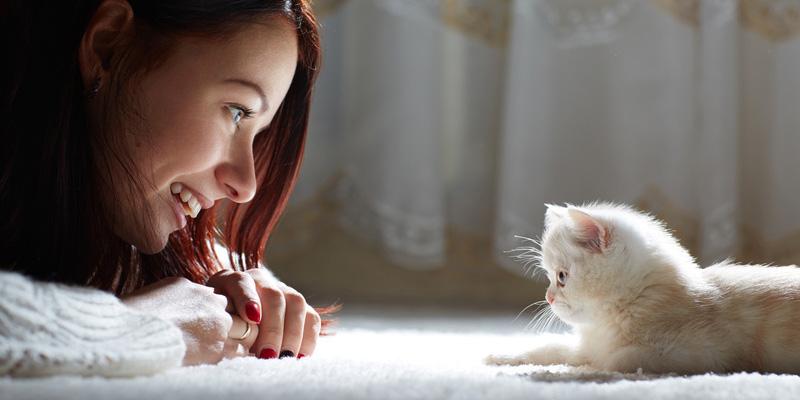 Die Erziehung von Katzen