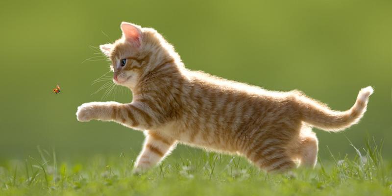Das große Katzenportal im Internet: Katzenzüchter, Kastration ...