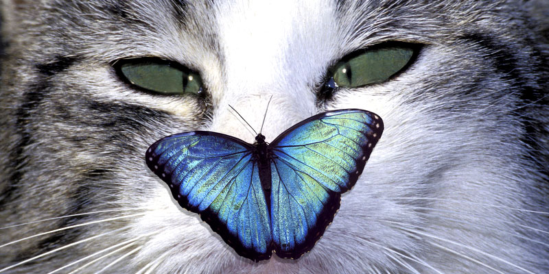 Katzenwitze