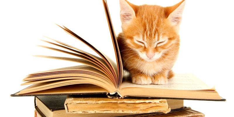 Literatur über Katzen
