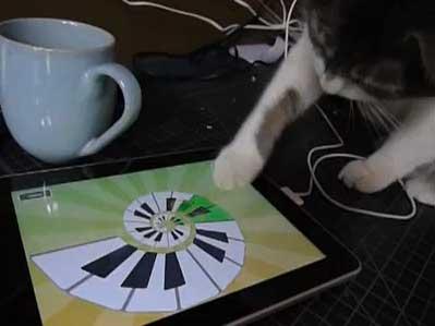 cat_ipad