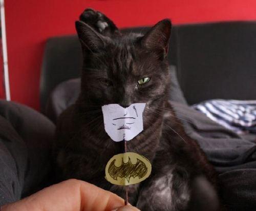 batman katze
