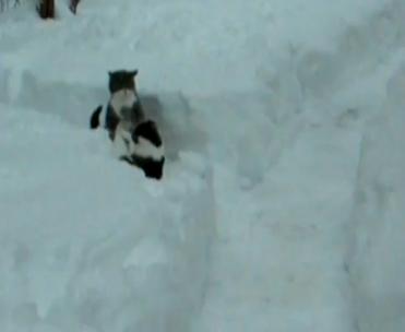 katzen-im-schnee