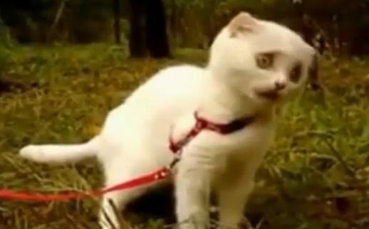 wtf-kittie