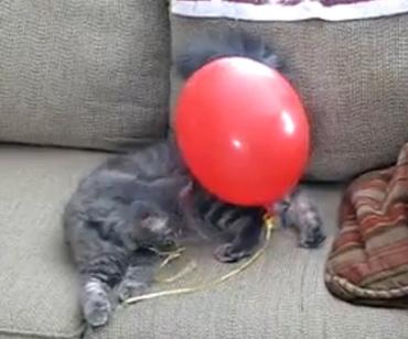 katze-ballon
