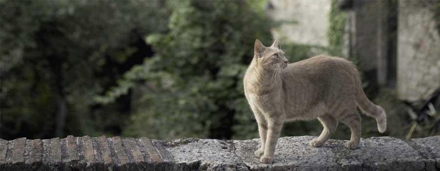 Französische Katzen und ihre Landsitze