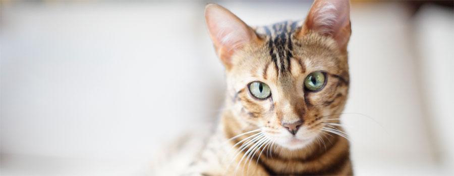 Gewinnspiel und 5 EUR Rabatt-Code für Katzen.de-Leser: Poopy Cat