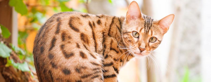 Gewinnspiel: Was deine Katze wirklich...