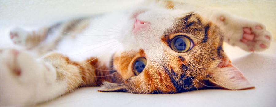 Gewinnspiel: Meine Katze versteht mic...
