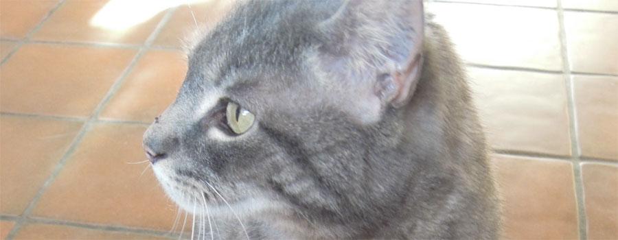 Der lange Weg – TASSO e.V. bringt Kat...