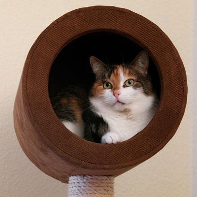 Was kann man gegen Arthrose bei Katzen tun?