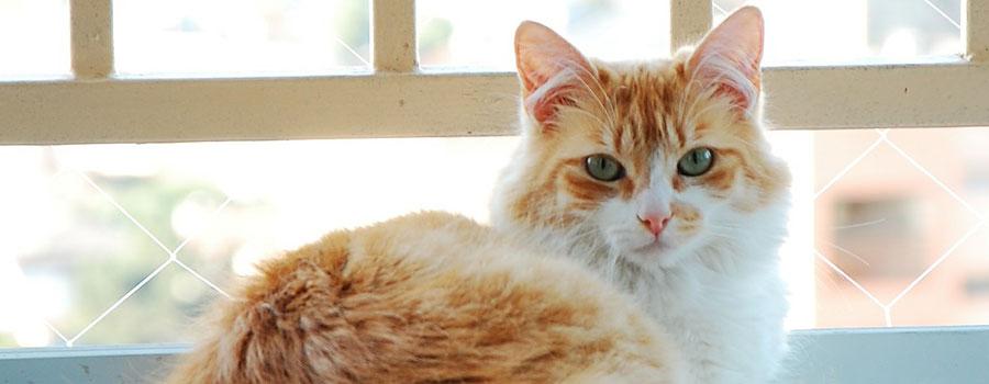 5 Tipps zur artgerechten Katzenhaltun...