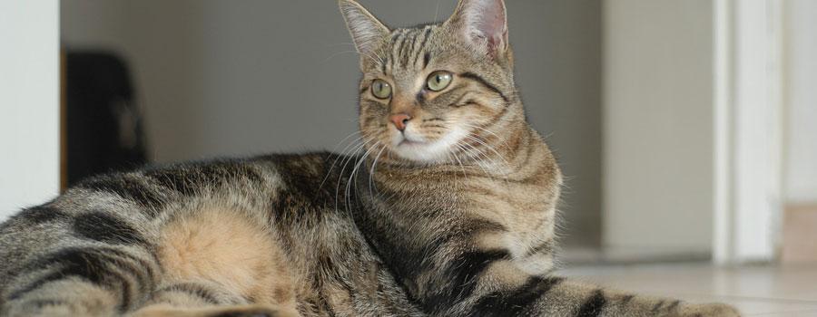 Arthrose bei Katzen – Wie Sie Beschwe...