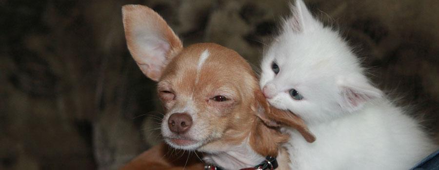 Teste dich: Hundhalter oder Katzenper...