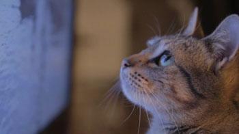 Gewinnspiel: Filme für Katzen