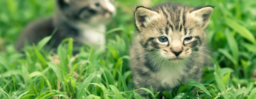 Katzen: Freche Racker auf Abwegen