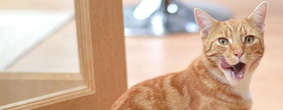 Gewinnspiel: Snacks for Cats – ...
