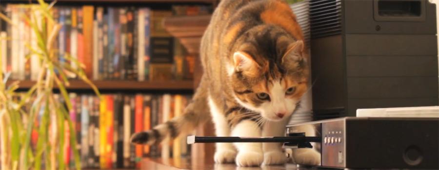 """10 Fragen an Anton Schleiter, Produzent von """"Filme für Katzen"""""""