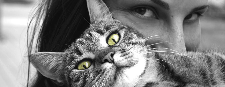 """10 Fragen an Anna Cavelius, Autorin von """"Kluge Frauen und ihre Katzen"""""""