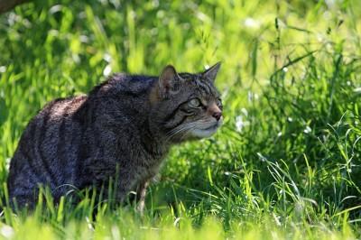Die Katze das Raubtier