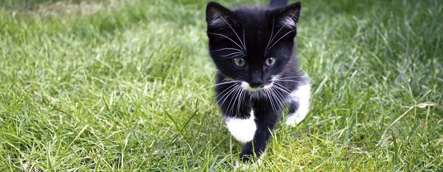 Gewinnspiel: Katzen-Trickkiste &#8211...