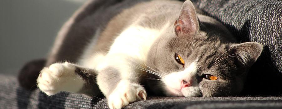 """Gewinnspiel: """"Grumpy Cat: Nein!..."""