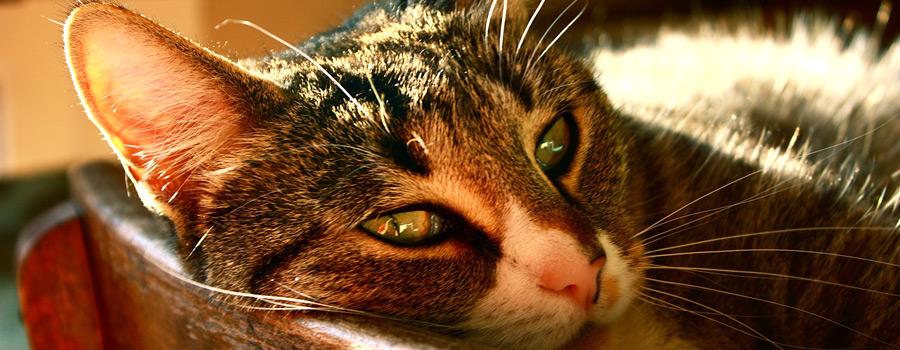 Gewinnspiel: Die Katze des Dalai Lama und die Kunst des Schnurrens