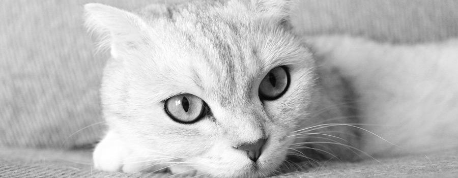 Gewinnspiel: Simons Katze - Bloß nicht zum Tierarzt