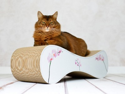 Gewinnspiel design katzenm bel le ver von cat on - Katzenmobel design ...