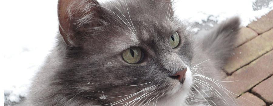 was hält katzen ab