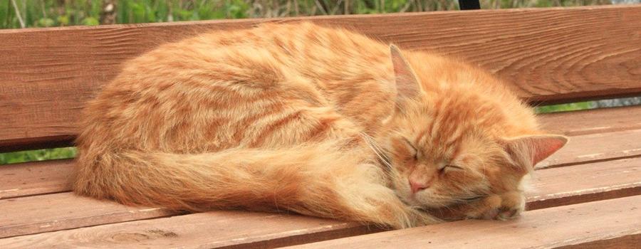 Katzen im hohen Alter – Tipps für eine artgerechte Pflege