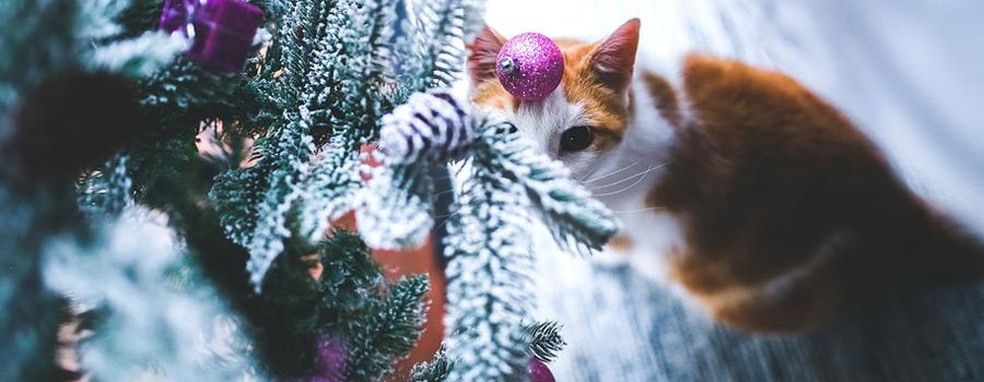 Katzenweihnacht – so verwöhnen Sie Ihre Katze richtig