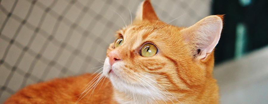 Keinen Einlauf für die Katze