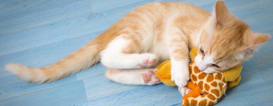 Gewinnspiel: Katzen – Viel Spaß...