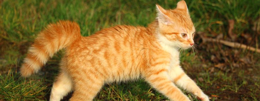 TASSO e.V. weiß: Das waren 2015 die beliebtesten Hunde- und Katzennamen