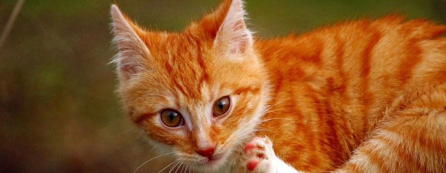 Katzen verstehen: Tipps für Katzenerziehung und Katzensprache