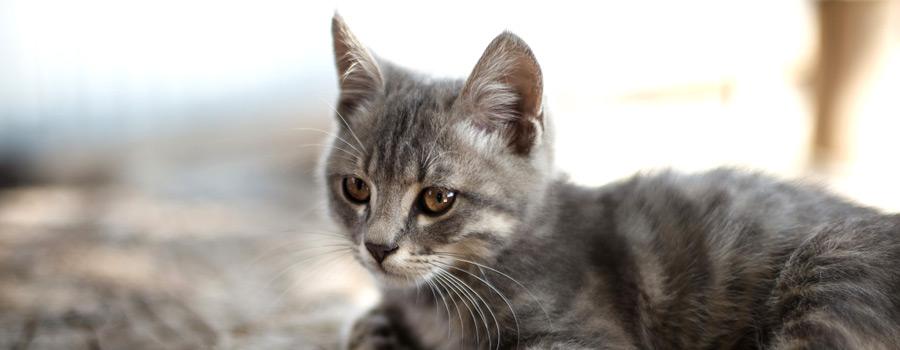 Gewinnspiel: Alfie kehrt heim - Ein Katzenroman