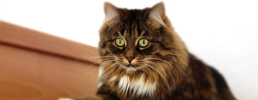 Gewinnspiel: Katzen - Wohlfühl-Garantie für kleine und große Schnurrer