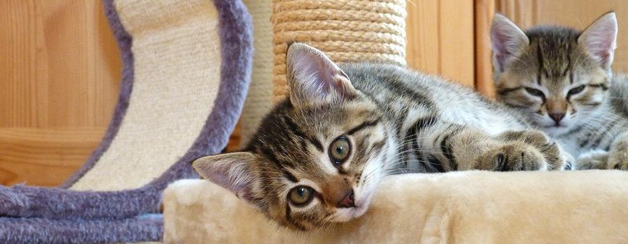 Gewinnspiel: Kätzchen - Haltung, Beschäftigung, Verhalten, Gesundheit