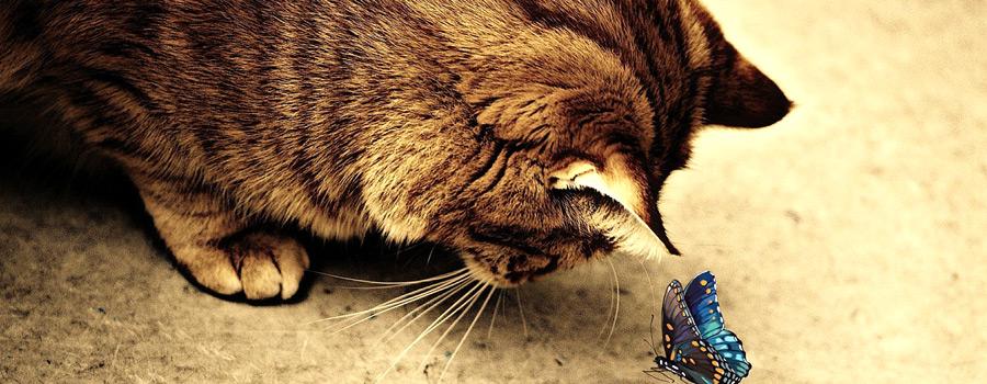 Lesung: Katzengeschichten im Café Schnurrke