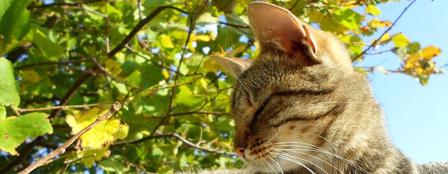 Gewinnspiel: Meine Katze, die Philosophin