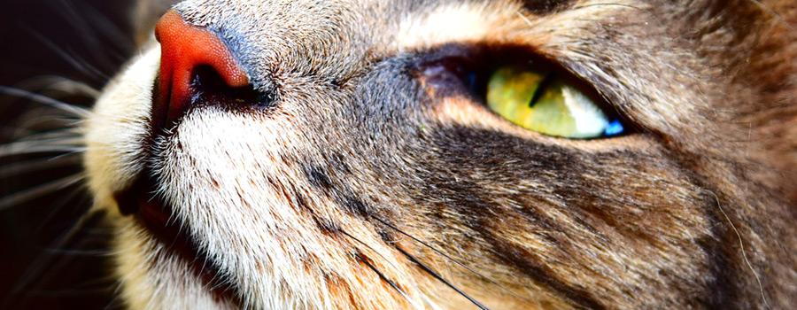 Pfotenstrecke: 10 Katzen – mal ganz nah