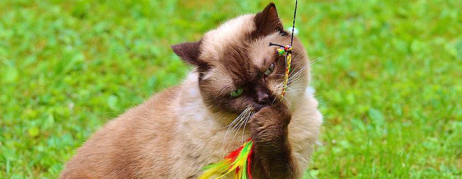 Gewinnspiel: Alles für die Katz! 88 Katzenspiele einfach selbst gemacht