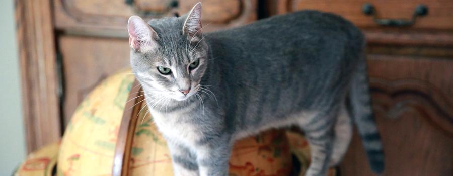 Mysterium Katze allein zu Haus