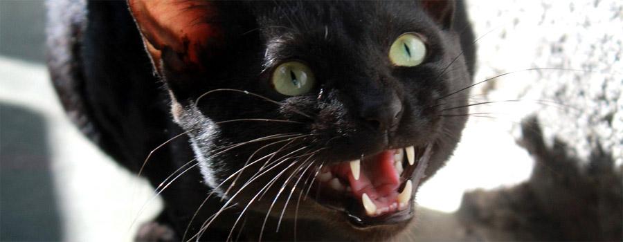 Lebensgefahr durch Katzenbiss