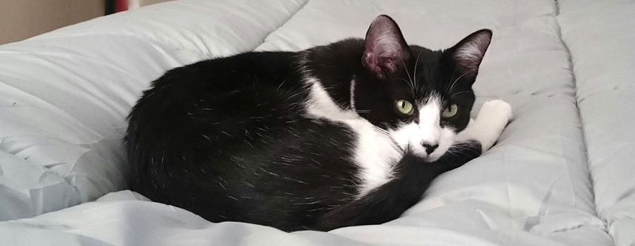 Gewinnspiel: Ein Doppelbett ist nicht groß genug für die Katze und mich - 100 Dinge, die ich als Katzenbesitzerin gelernt habe
