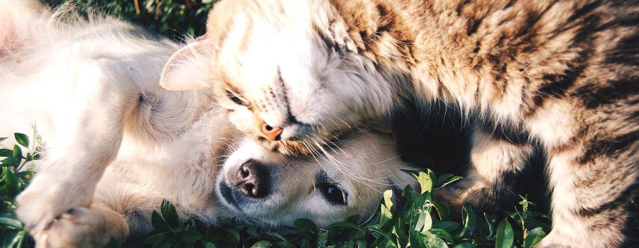 Pfotenstrecke: 10 Katzen, die sich mit Hunden prima verstehen