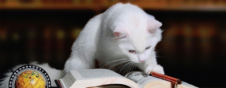 Gewinnspiel: Sophisticats - Lesende Katzen