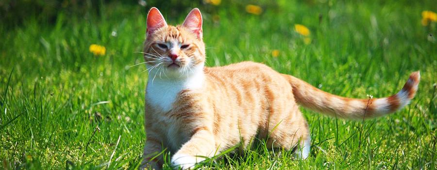 Barf - Rohfleisch für Katzen